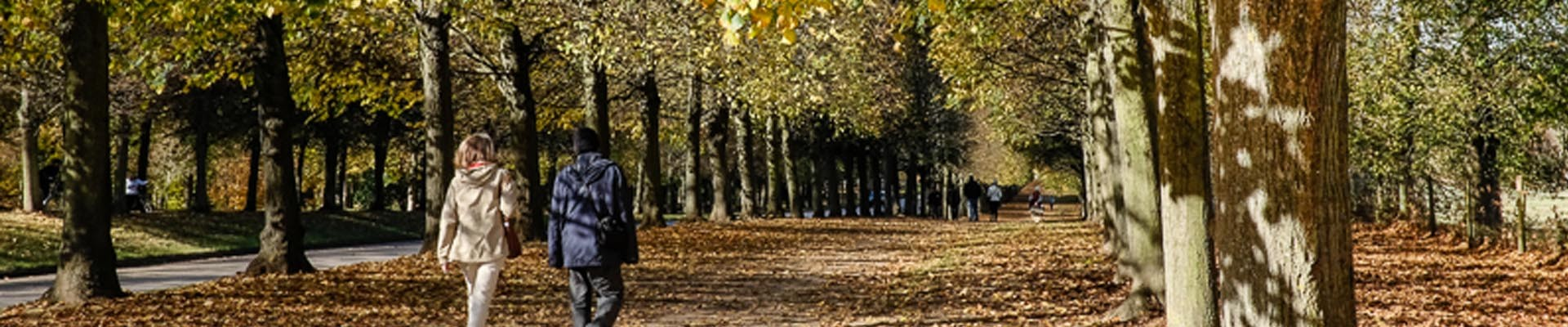 Fall in the park of the Palace of Versailles