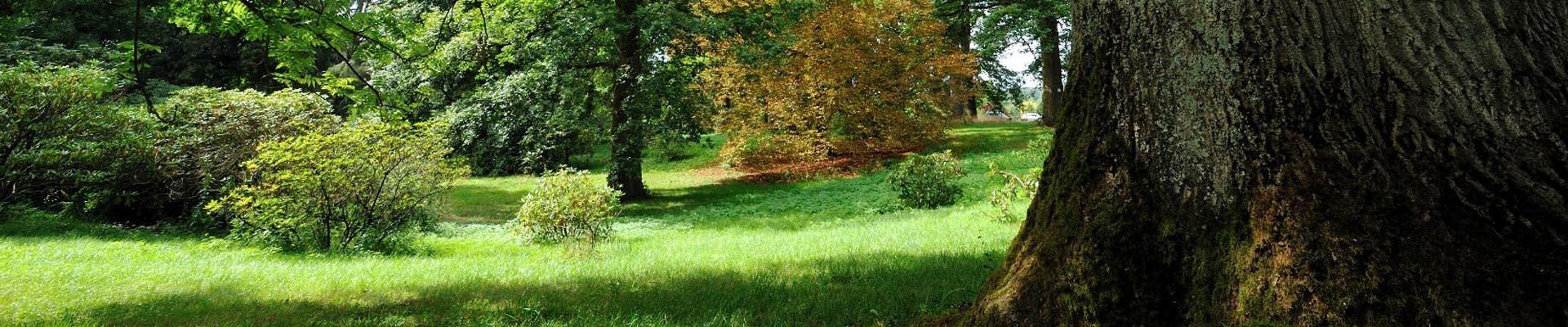 Arboretum of Chèvreloup