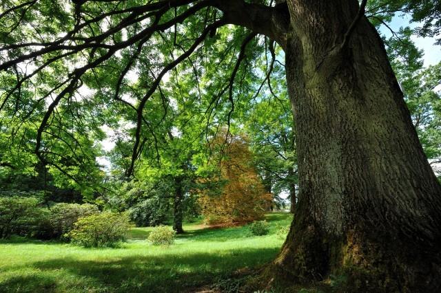 Arboretum de Chévreloup