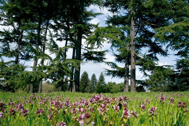 Arboretum de Chèvreloup en Versalles