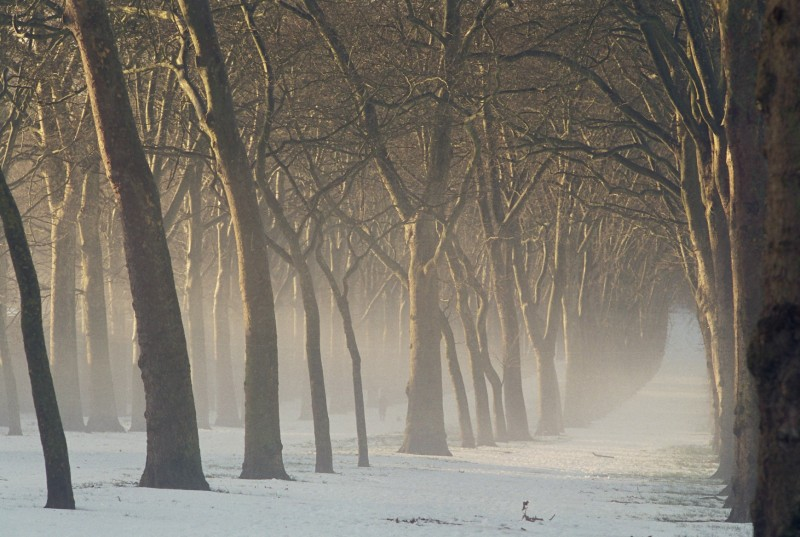 Trees in the park of the Domaine de Versailles