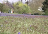 Le domaine de Madame Elisabeth : la biodiversité en ville