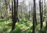 forêt - versailles - balade - visite - nature - découverte