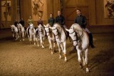 Academy of Equestrian - Equestrian show - stables - horses - Versailles - Bartabas
