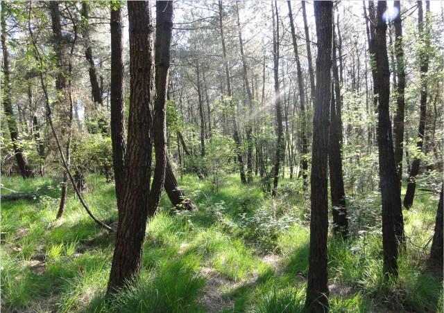 Les trésors insoupçonnés de la Forêt