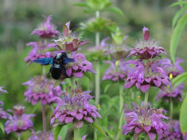 Le domaine de Madame Elisabeth : la renaissance de la nature