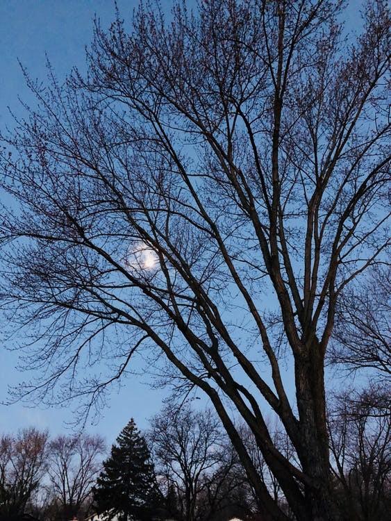 arbre en hiver - forêt - naturez-vous - balade - visite - sortie