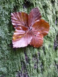 Balades nature créative