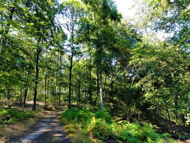 Balade en forêt - Versailles - Nature