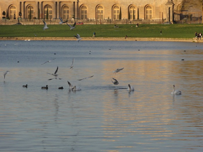 ornithologie - versailles - oiseaux - nature - balade